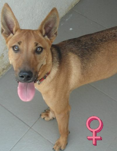"Briea <font color=""ff0000""><a href=""https://spca-penang.net/adorable-dogs/?sg_popup_id=3856"">more info</a></font>"