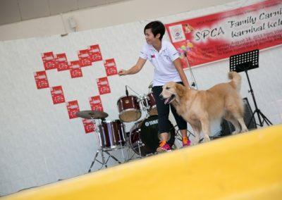 spca_animal_day_2013-245_10135968465_o